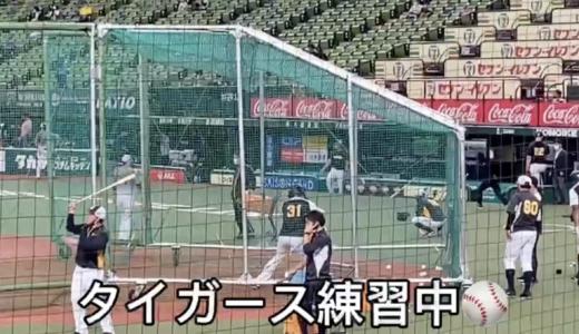 プロ野球交流戦⚾️